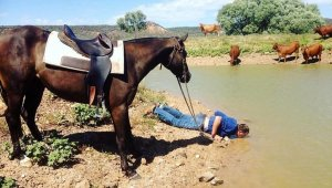 Lead-a-Horse-to-Water-1024x577.jpg