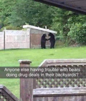 bear drugs.jpg